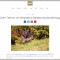 Intervista sul Cairn Terrier